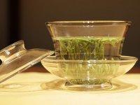 ziołowa herbata z czystka